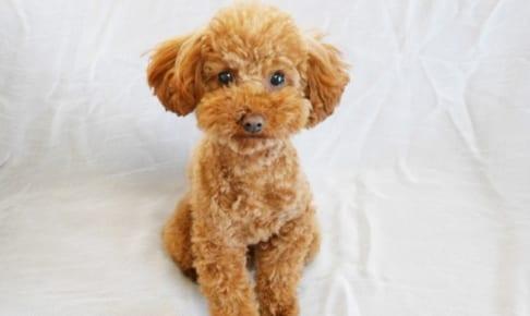 犬のペット保険で通院費は補償される?