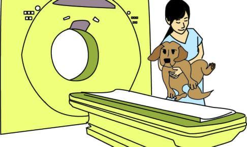 愛犬のMRI・CT検査の治療費はペット保険適用内?