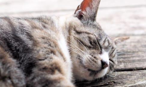 愛猫のためにペット保険に加入する必要はある?
