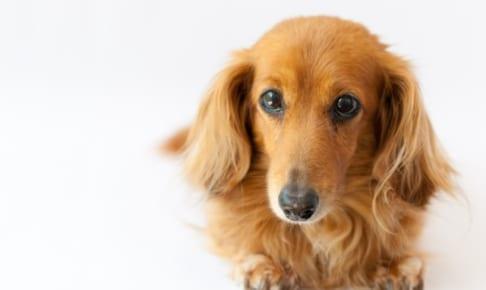 犬のフィラリア予防は、ペット保険の対象?