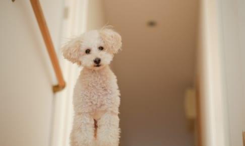 犬のペット保険の免責事項ってなに?その免責金額は?