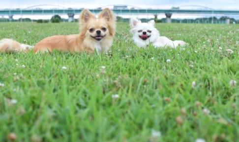 老犬でも入れるペット保険の選び方!