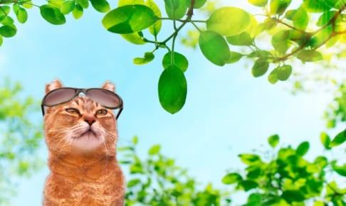 ペット貯金するより猫のペット保険に入るほうがお得ってホント?