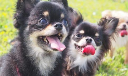 【厳選】小型犬におすすめなペット保険を比較!!