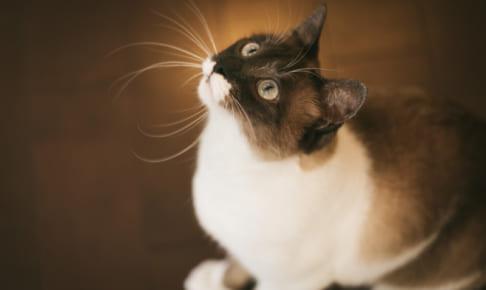 初めての猫のペット保険! 選び方を解説!