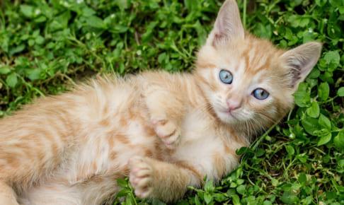 雑種猫はペット保険に入れる??