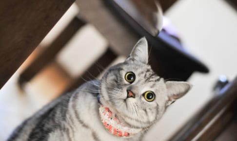 持病のある猫でも入れるペット保険ってある?