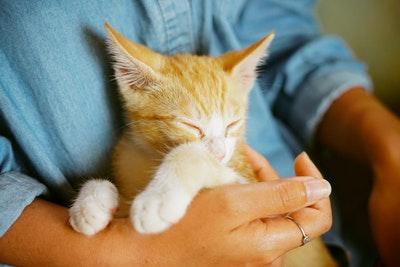 愛猫が癌になった場合の治療費はいくら?癌になってもペット保険に加入できる?