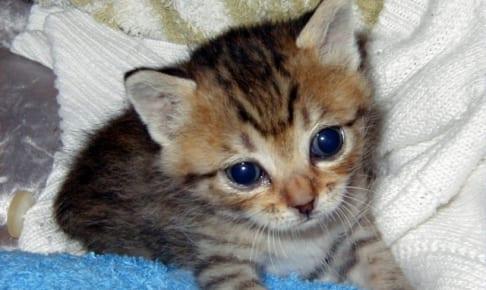 【厳選】飼い猫におすすめのペット保険の選び方!最適な保険を選ぼう!