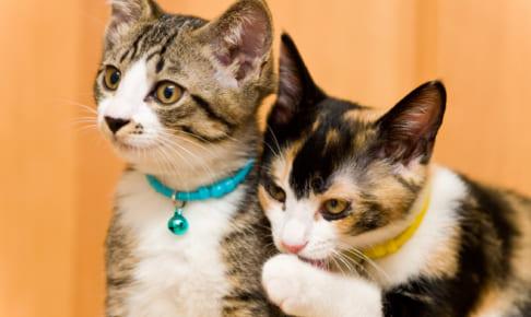 【徹底比較】飼い猫にぴったりのペット保険は??最適な保険を選ぼう!!