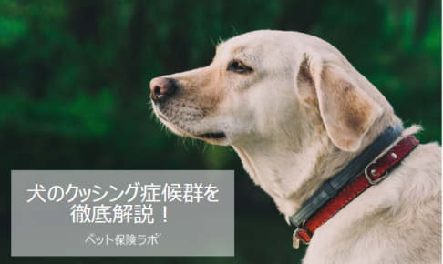 犬のクッシング症候群(副腎皮質機能亢進症)を徹底解説!犬の病気を正しく知ろう