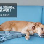 犬の乳腺腫瘍を徹底解説!犬の病気を正しく知ろう