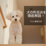 犬の外耳炎を徹底解説!犬の病気を正しく知ろう