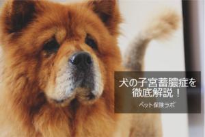 犬の子宮蓄膿症を徹底解説!犬の病気を正しく知ろう