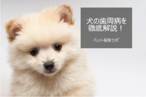犬の歯周病を徹底解説!犬の病気を正しく知ろう