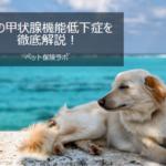 犬の甲状腺機能低下症を徹底解説!犬の病気を正しく知ろう