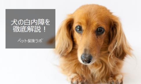 犬の白内障を徹底解説!犬の病気を正しく知ろう