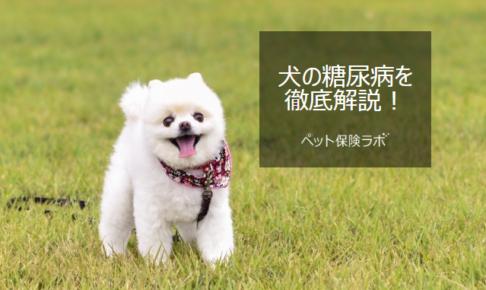 犬の糖尿病を徹底解説!犬の病気を正しく知ろう