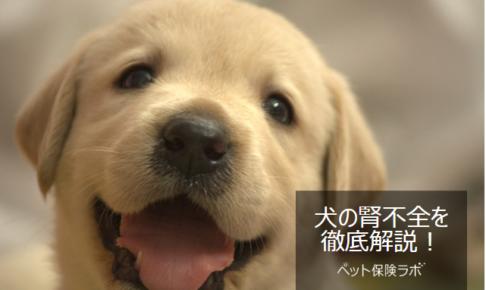 犬の腎不全を徹底解説!犬の病気を正しく知ろう