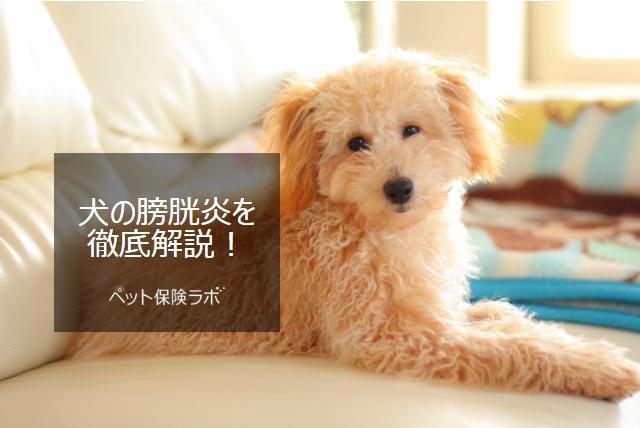 犬の膀胱炎を徹底解説!犬の病気を正しく知ろう