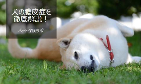 犬の膿皮症を徹底解説!犬の病気を正しく知ろう