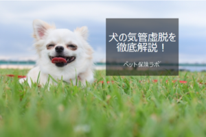 犬の気管虚脱を徹底解説!犬の病気を正しく知ろう