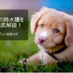 犬の肺水腫を徹底解説!犬の病気を正しく知ろう