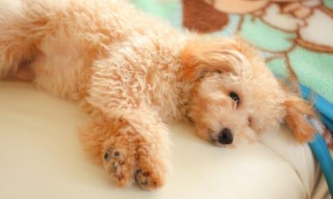 犬の肺炎を徹底解説!犬の病気を正しく知ろう