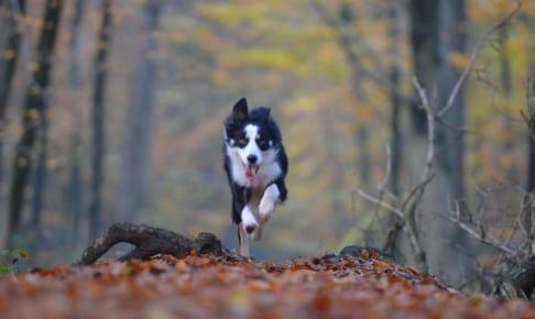 犬の流涙症を徹底解説!犬の病気を正しく知ろう