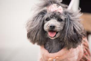 犬の脳炎を徹底解説!犬の病気を正しく知ろう