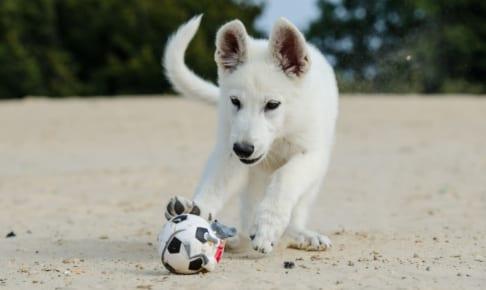 犬の角膜炎を徹底解説!犬の病気を正しく知ろう