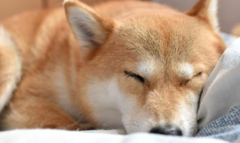 犬の血管肉腫を徹底解説!犬の病気を正しく知ろう