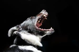 犬の犬パルボウイルス感染症を徹底解説!犬の病気を正しく知ろう