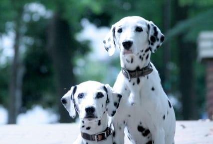 犬の脂漏症を徹底解説!犬の病気を正しく知ろう