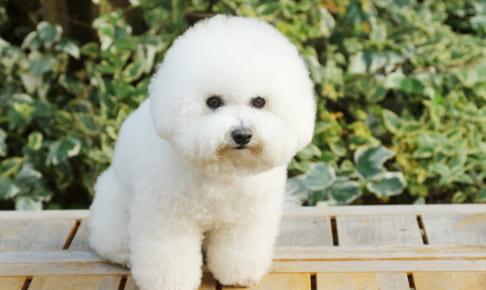 犬の前立腺肥大を徹底解説!犬の病気を正しく知ろう