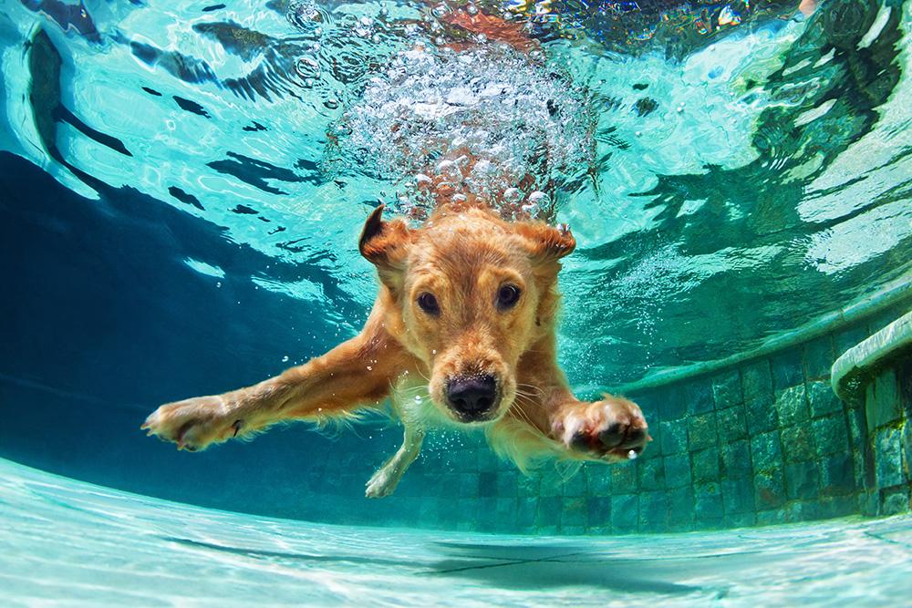 犬の尿崩症を徹底解説!犬の病気を正しく知ろう