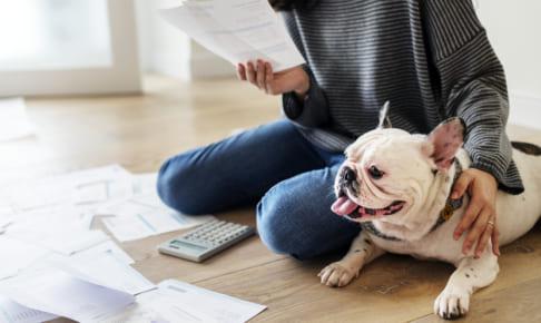 犬の低血糖症を徹底解説!犬の病気を正しく知ろう