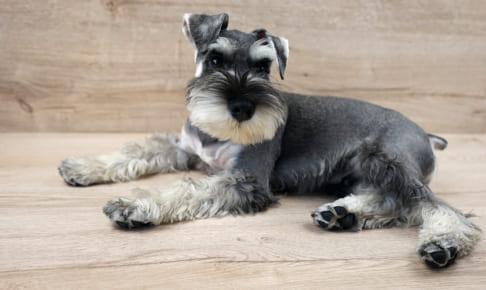 犬の気管支炎を徹底解説!犬の病気を正しく知ろう
