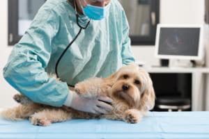 犬の熱中症(熱射病・日射病)を徹底解説!犬の病気を正しく知ろう