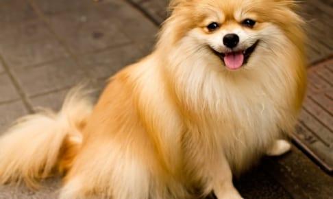 犬の馬尾症候群を徹底解説!犬の病気を正しく知ろう