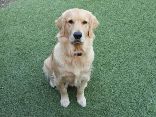 犬の骨折を徹底解説!犬の病気を正しく知ろう