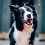 犬のブドウ膜炎を徹底解説!犬の病気を正しく知ろう