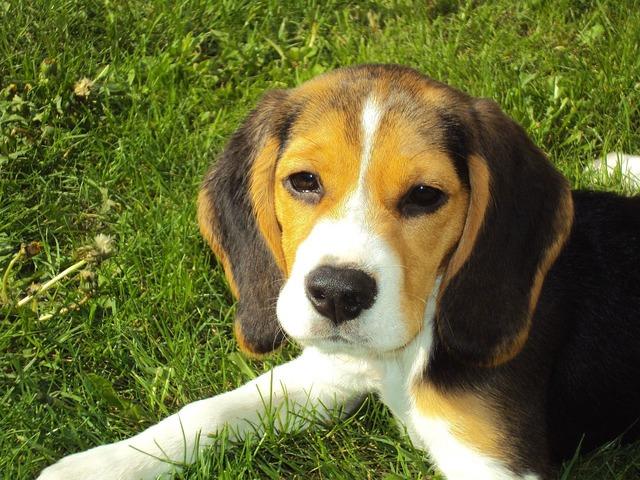 犬の扁平上皮がんを徹底解説!犬の病気を正しく知ろう