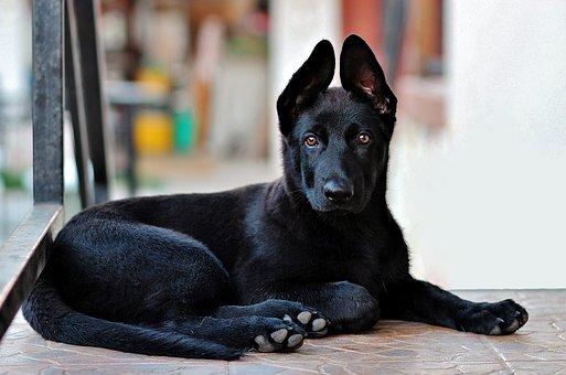 犬の緑内障を徹底解説!犬の病気を正しく知ろう