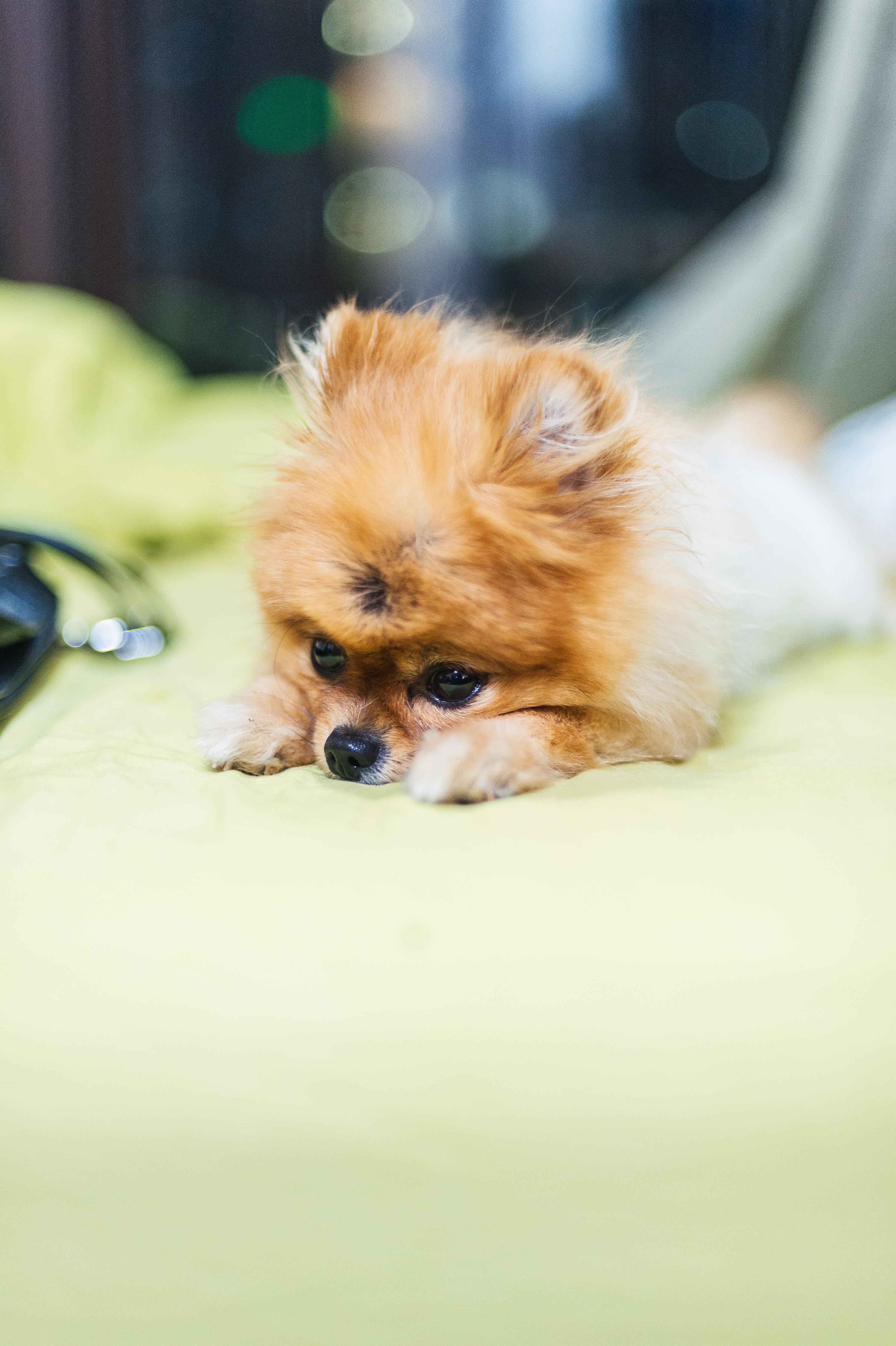 犬の肥満細胞腫を徹底解説!犬の病気を正しく知ろう