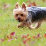 犬の膵炎を徹底解説!犬の病気を正しく知ろう