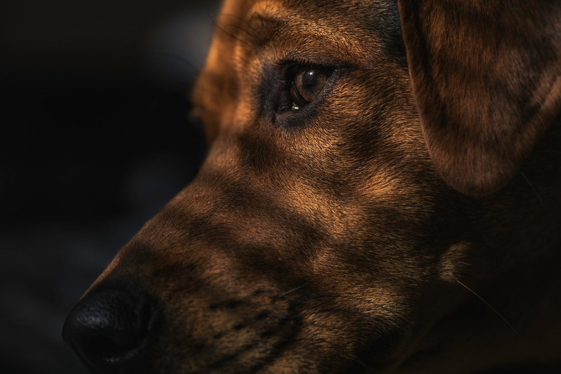 犬のアレルギー性皮膚炎を徹底解説!犬の病気を正しく知ろう