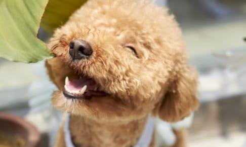 犬の耳血腫を徹底解説!犬の病気を正しく知ろう