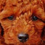 犬の副鼻腔炎を徹底解説!犬の病気を正しく知ろう
