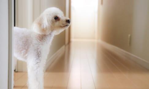 犬の中耳炎を徹底解説!犬の病気を正しく知ろう